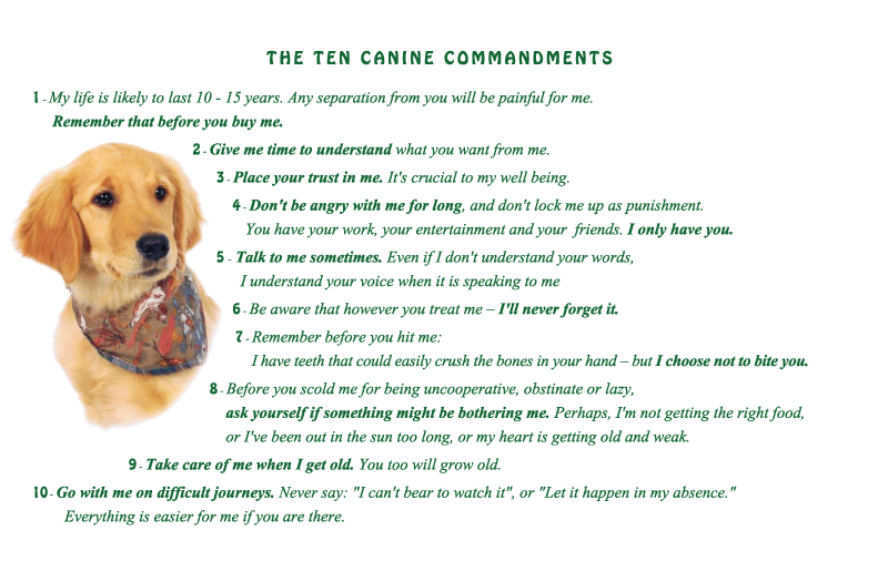 Image Golden Retriever Puppy With Ten Canine Commandments